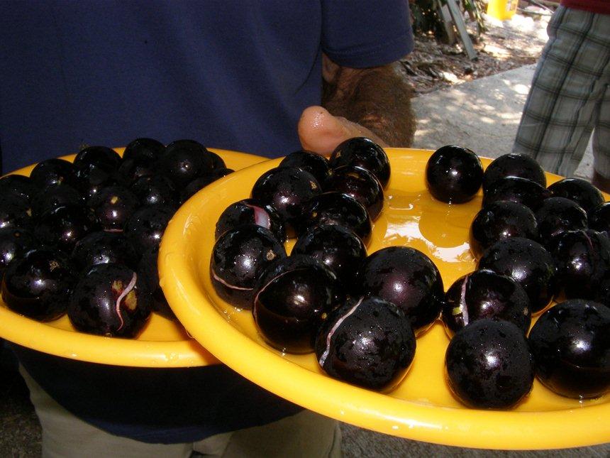 פירות הג'בוטיקבה